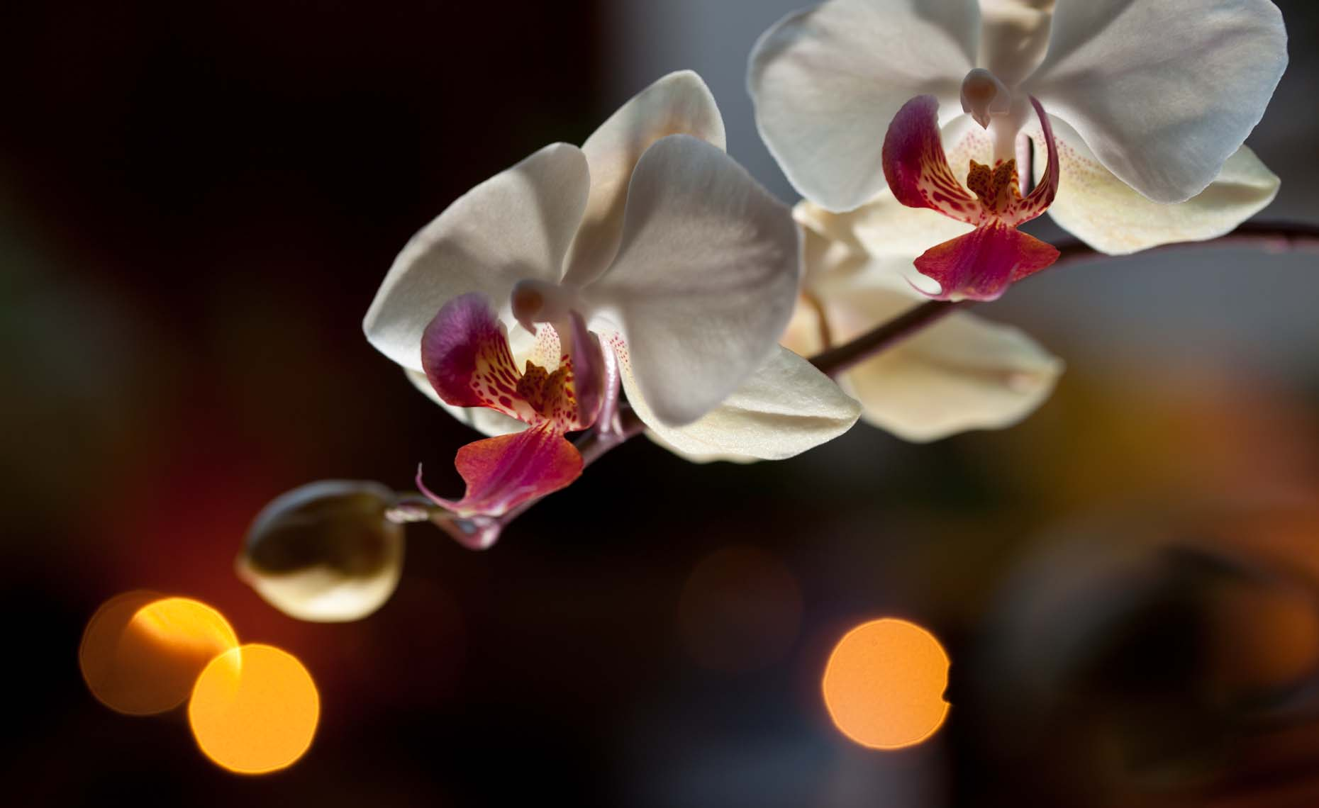 Mixed light orchids